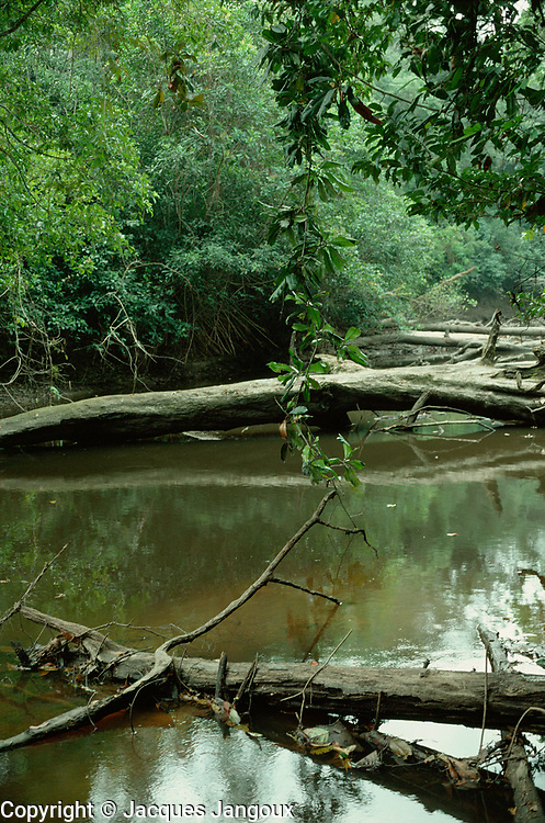 Dead tree trunks and reflections in Meno River in Tropical Rain Forest, with vine hanging from tree, Tai National Park, Ivory Coast, Africa
