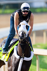 Derby 142 hopeful Tom's Ready with Emerson Chavez up were on the track for training, Monday, May 02, 2016 at Churchill Downs in Louisville.