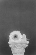 Sunflower atop classic column