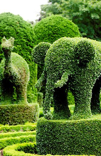 Topiary elephant in garden near Newport Rhode Island; USA