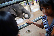 Feeding time at Pinnawala Elephant Orphanage in Sabaragamuwa Province of Sri Lanka. <br /> <br /> For the conscious visitor, a strange and uncomfortable feeling arises during the visit, as it can be easily mistaken with a zoo or a profitable business, which makes it hardly recommendable. <br /> <br /> Some animal welfare associations, such as Born Free, and elephant experts show strong disagreement with the management and request changes in the level of care, with concerns about chaining, transfers, breeding and the encouragement of visitors by the keepers to have direct contact with the animals, mainly motivated by the exchange of tips and not always positive for the elephant&yen;s wellbeing.