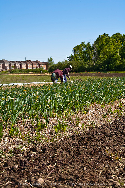 FarmStart's McVean Incubator farm in Brampton, a suburb of Toronto.