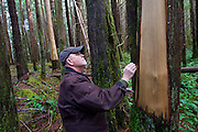 Jim Furabotten - Checks to see if these cedar trees were stripped of their bark legally or by poachers.   - Olympic Peninsula, WA State.  <br />