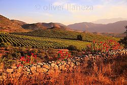 FOTÓGRAFO: Oliver Llaneza ///<br /> <br /> Viñedos de Viña Chada