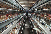 Belden Egg Ranch. Central Valley, California. 500-foot row of laying hens. (Multiple flash photo) USA.