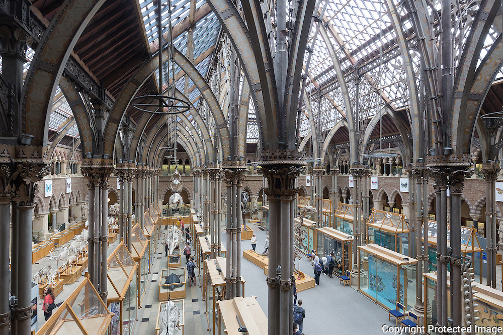 British Natural History Museum Pillars