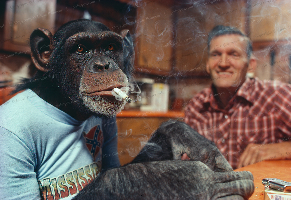 Cedo the farming chimp lights up after a days work.  Circa 1981