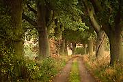 Eine Eichenallee in der Nähe von Eickelberg, Warnowtal, Deutschland