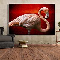 American Pink Flamingos