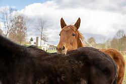 Vinck Raf, BEL<br /> <br /> © Hippo Foto - Dirk Caremans<br /> 09/03/2020
