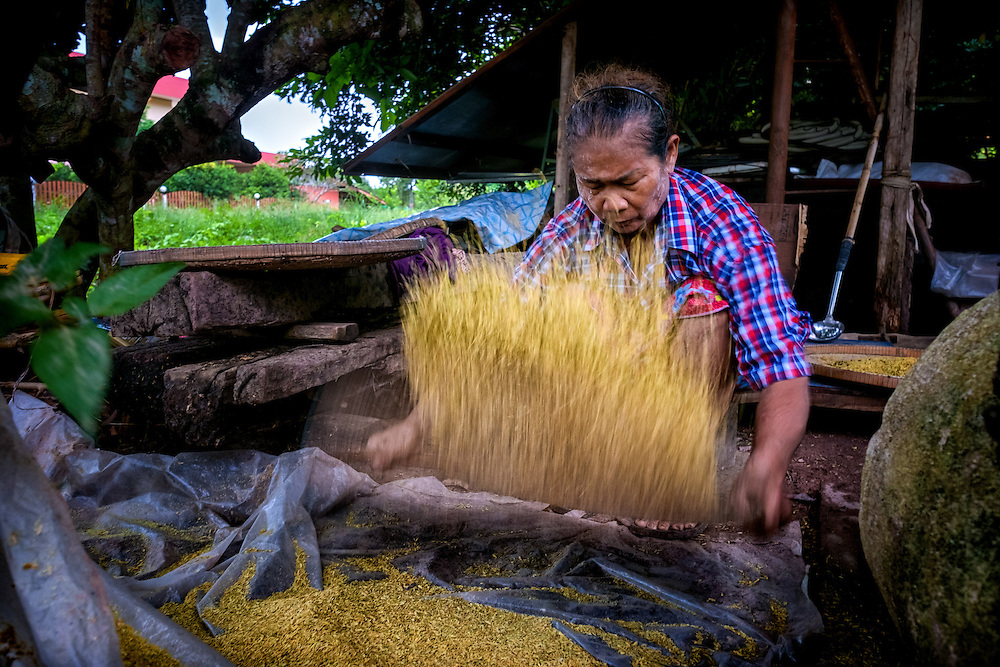 Hand Processing Green Rice in Nakhon Nayok, Thailand. PHOTO BY LEE CRAKER