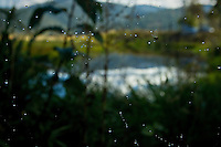 A fly and water droplets are suspended by a spider web at a wetland area Tuesday near Medimont.