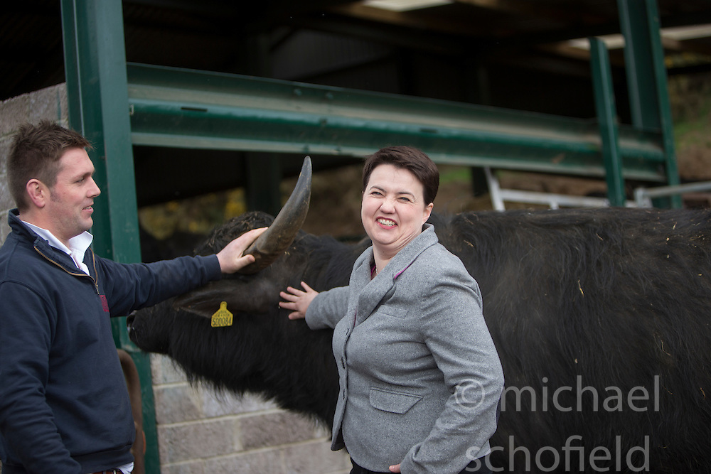 The Scottish Conservative leader Ruth Davidson rides a buffalo, with Steve Mitchell, buffalo farmer.