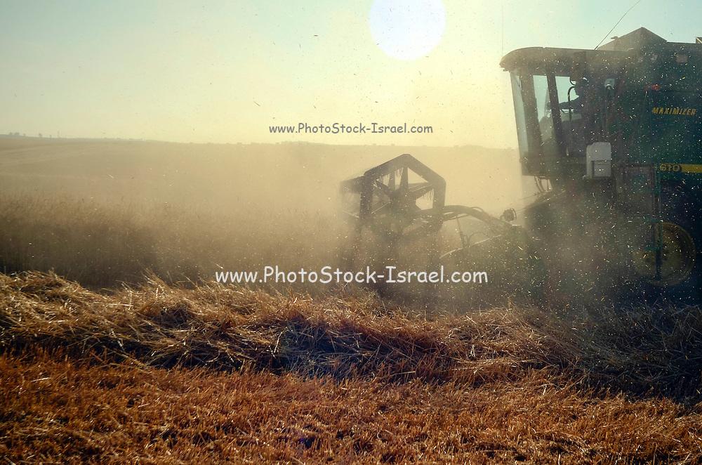 Combine harvester wheat Harvesting close up