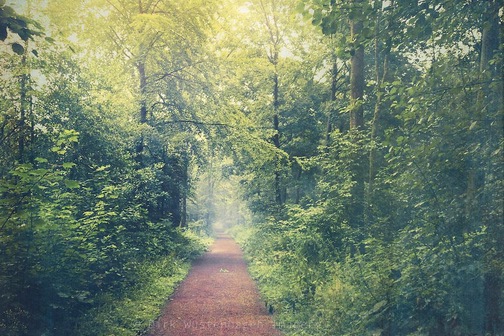 Path through sunlit woods