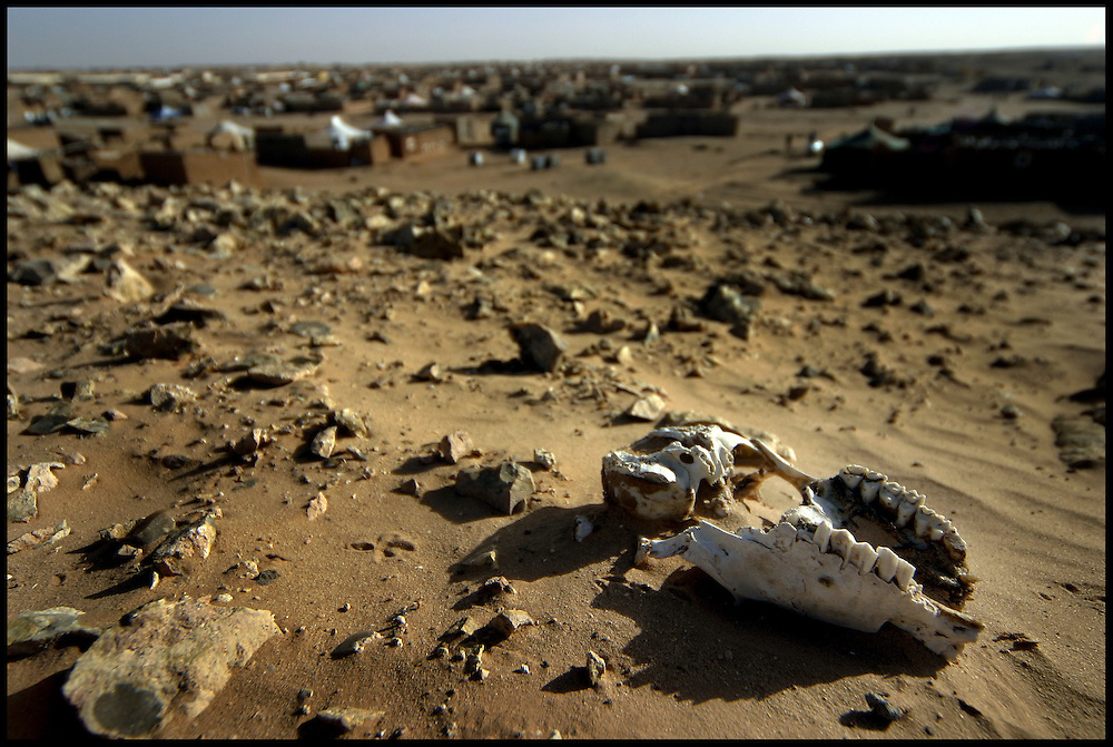 A general view of a goat skull on the ground at February 27 village, Friday Dec. 30, 2005.