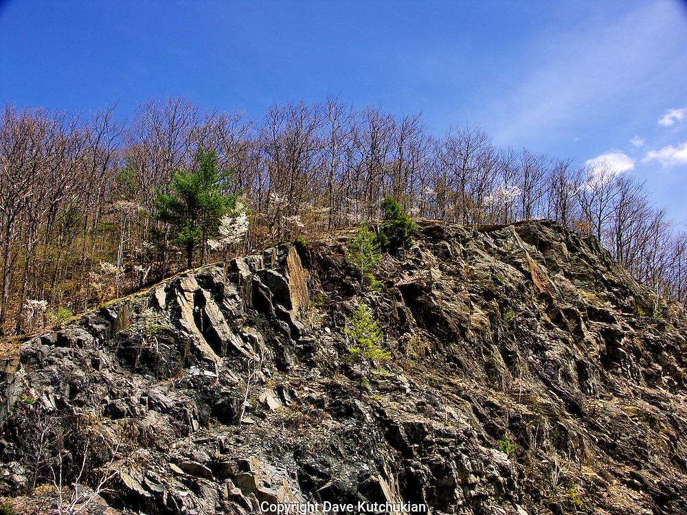 driving along rt 30, i was struck by the contrast of spring flowering trees blooming against the harsh ledge below.  Nature's life is resilient