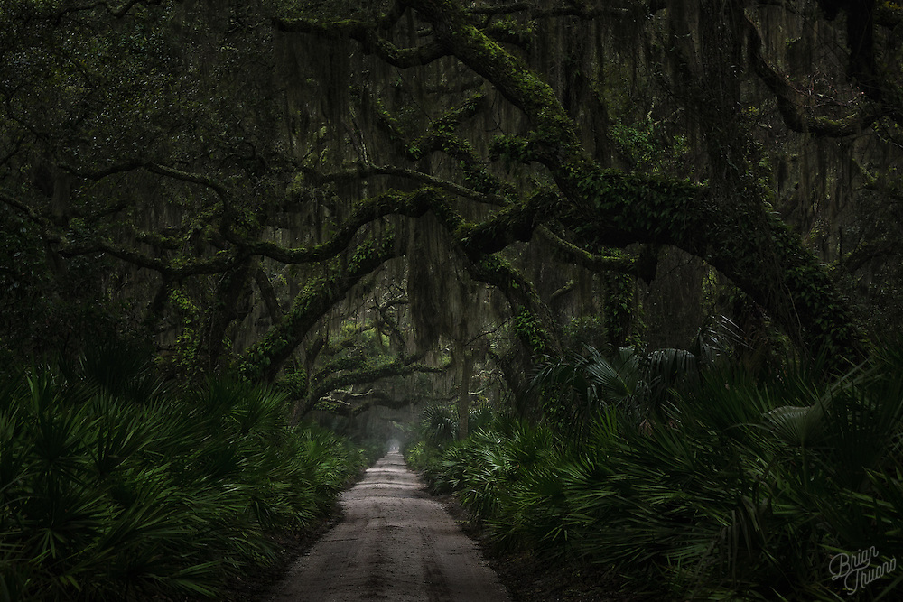 On a cold rainy winter day, wandering around Cumberland Island can be a little unsettling. Though beautiful, the oak trees create a dark canopy that shrouds the main road through the park. The tendrils of Spanish moss dangle and sway in the ocean breeze as if they were ghosts of past residents. The feral horses and wild hogs that roam the island will unexpectedly rattle the ferns and dash across the road in front of you. But at least they were not sneaking up behind you...