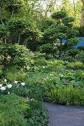 Green and white planting in the Laurent-Perrier Garden. Cloud pruned hornbeam - Carpinus betulus. Winner Best in Show Chelsea 2008