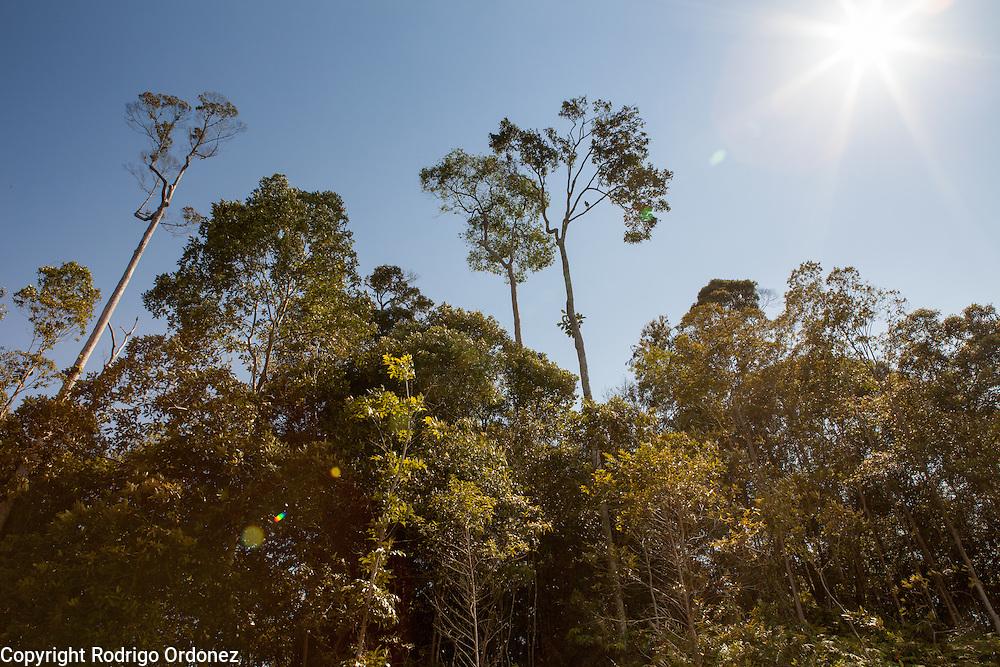 General view of trees at the Arsari Lestari conservation area in Penajam Paser Utara district, East Kalimantan, Indonesia, on March 12, 2016. <br /> (Photo: Rodrigo Ordonez)