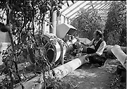 03/07/1963<br /> 07/03/1963<br /> 03 July 1963<br /> Views of tomato farm at Rush and Kinsealy, Co. Dublin. Image shows the hot air blower in hothouses at Kinsealy.