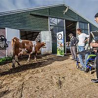 Nederland, Schipluiden , 29 oktober 2016.<br /> Als tegenhanger van de koeiendans in de lente, organiseert World Animal Protection bij boer Arie van der Berg van Hoeve Ackerdijk ook een &lsquo;koeien uitzwaai-evenement&rsquo;, waarbij symbolisch de laatste weidedag van de koeien wordt afgesloten met een uitzwaaidag.<br /> Nog maar tweederde van de koeien graast in het weiland.<br /> <br /> Foto: Jean-Pierre Jans