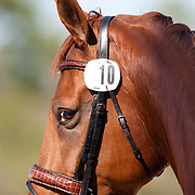 Paragon during the 2013  World Dressage Masters at the Jim Brandon Equestrian Center in West Palm Beach, Florida.