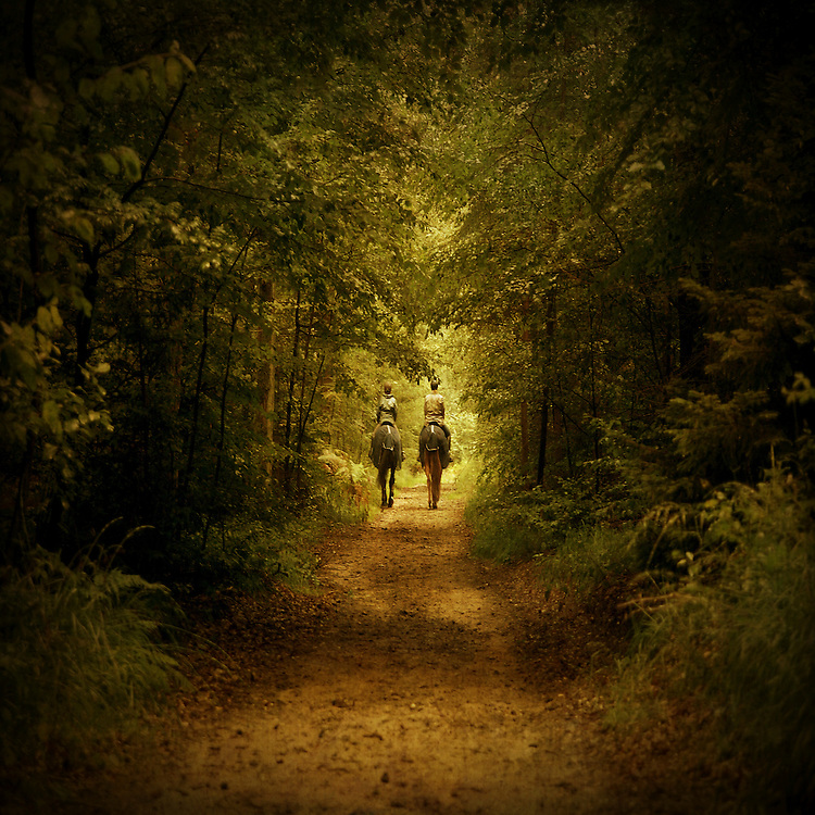 Rear view of two unrecognizable people riding horse side by side on a small track through a forest