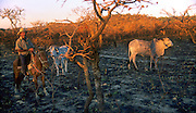 Small farmer rancher checking his cattle in recently burned cerrado savanna in Brazilian Highlands, Goias, Brazil
