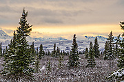 An early season snow across the boreal forests and Alaskan Range of mountains at sunset in Denali National Park, McKinley Park, Alaska