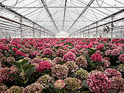 AEROTROPOLIS, AMSTERDAM SEPTEMBER 2015<br />The &quot;City of Glass&quot;: the 60 km2 of low environmental impact greenhouses around Amsterdam.<br /> @Giulio Di Sturco
