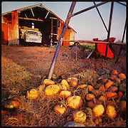 Old Farm Shed and Rotting pumpkins
