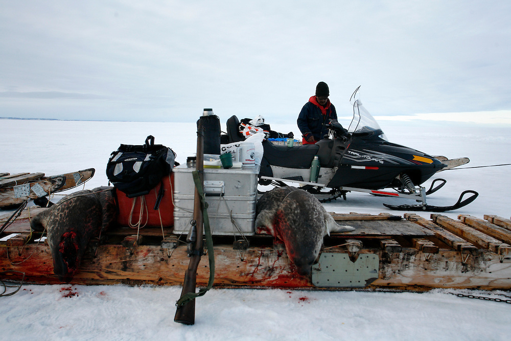 Sasa Samson 37 next to his snowmobile and the seals that he hunts in Resolute Bay  ..Tuesday June 12 2007..