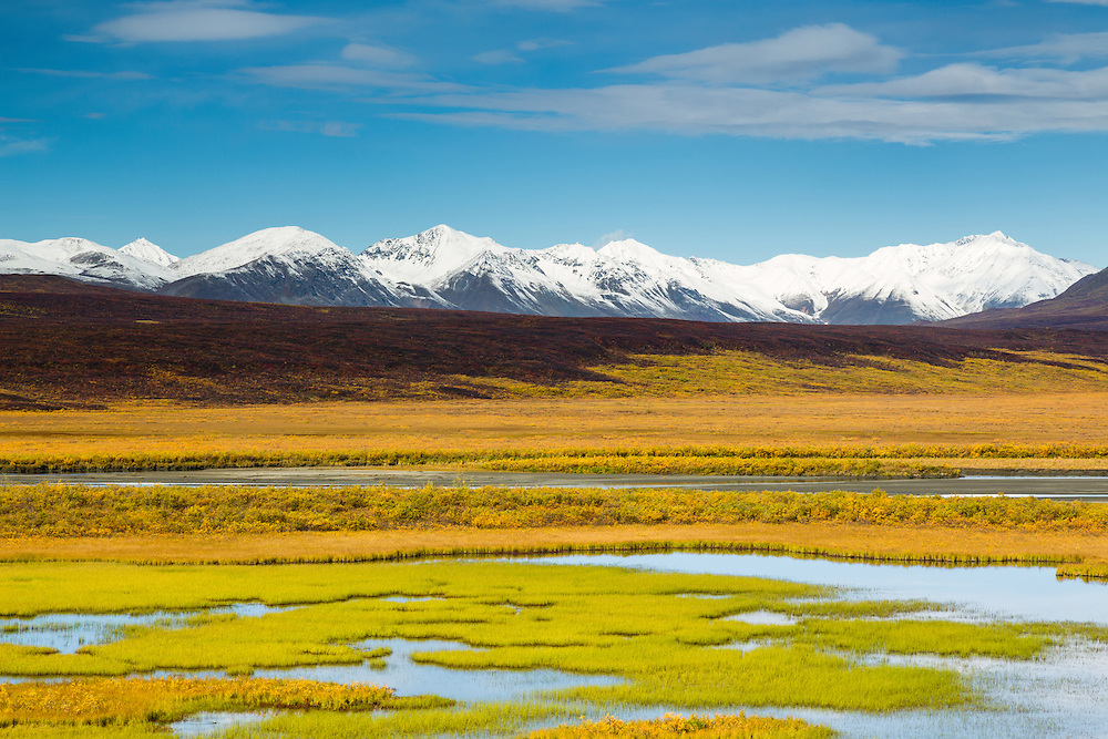 Lush marsh grass along a pond contrasts with the late autumn colors of the tundra in the Maclaren River Valley with the snow-covered Alaska Range in the background along the Denali Highway in Southcentral Alaska. Afternoon.