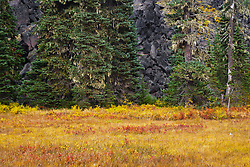 """A stream once flowed here now only a meandering spring displaying autumn color the Takh Takh Meadow Gifford Pinchot National Forest in Washington state's Cascade Mountain Range near Mount Adams. (""""Takh Takh"""" is a Taidnapam/Yakama word meaning """"small Prairie"""") in the edge of the meadow, a lodgepole pine forest hides an ancient volcanic flow - large black rough bolders rising abruptly 50-100 feet above the surrounding land."""