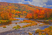 The North River and the Acadian forest in autumn foliage <br />
