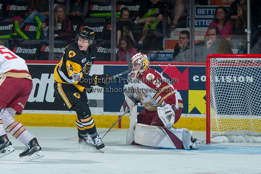 REGINA, SK - MAY 22:  MacKenzie Entwistle #44 of Hamilton Bulldogs looks for the pass in front of Evan Fitzpatrick #31 of Acadie-Bathurst Titan at the Brandt Centre on May 22, 2018 in Regina, Canada. (Photo by Marissa Baecker/CHL Images)