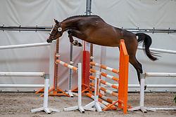095, Lupina<br /> KWPN Kampioenschappen - Ermelo 2019<br /> © Hippo Foto - Leanjo De Koster<br /> 095, Lupina
