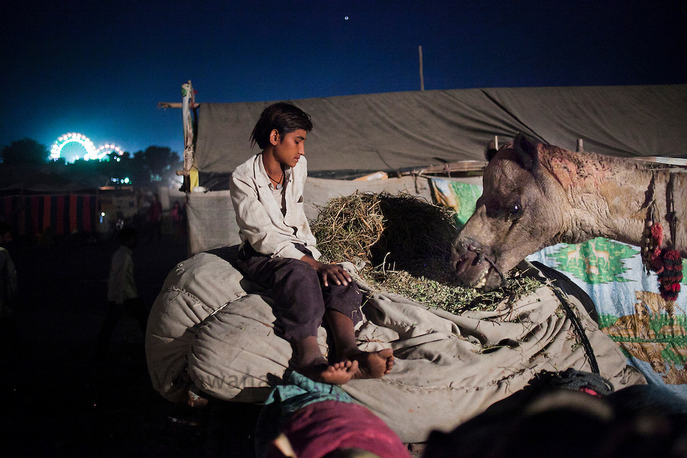 A boy feeds his camel on the fair grounds in Pushkar, India, November 5, 2011.  Photographer: Prashanth Vishwanathan