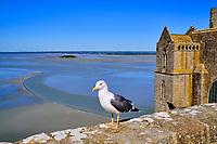 France, Manche (50), Baie du Mont Saint-Michel classé Patrimoine Mondial de l'UNESCO, Abbaye du Mont Saint-Michel, terrasse de l'ouest // France, Normandy, Manche department, Bay of Mont Saint-Michel Unesco World Heritage, Abbey of Mont Saint-Michel