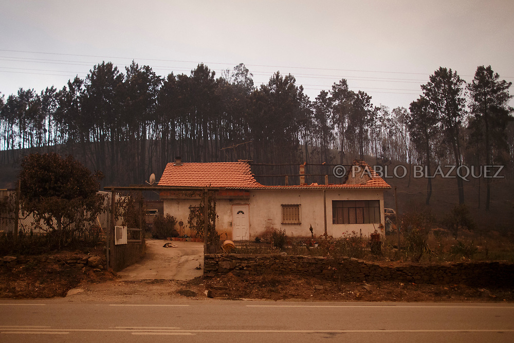 LEIRIA, PORTUGAL - JUNE 18:  A dog lays on the ground as he guards a burned house after a wildfire took dozens of lives on June 18, 2017 near Castanheira de Pera, in Leiria district, Portugal. On Saturday night, a forest fire became uncontrollable in the Leiria district, killing at least 62 people and leaving many injured. Some of the victims died inside their cars as they tried to flee the area.  (Photo by Pablo Blazquez Dominguez/Getty Images)