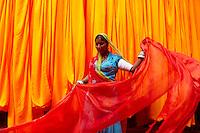 Inde, Rajasthan, Usine de Sari, Les tissus sechent en plein air. Ramassage des tissus secs par des femmes et des enfants avant le repassage. Les tissus pendent sur des barres de bambou. Les rouleaux de tissus mesurent environ 800 m de long. <br />  // India, Rajasthan, Sari Factory, Textile are dried in the open air. Collecting of dry textile  are folded by women and children. The textiles are hung to dry on bamboo rods. The long bands of textiles are about 800 metre in length.