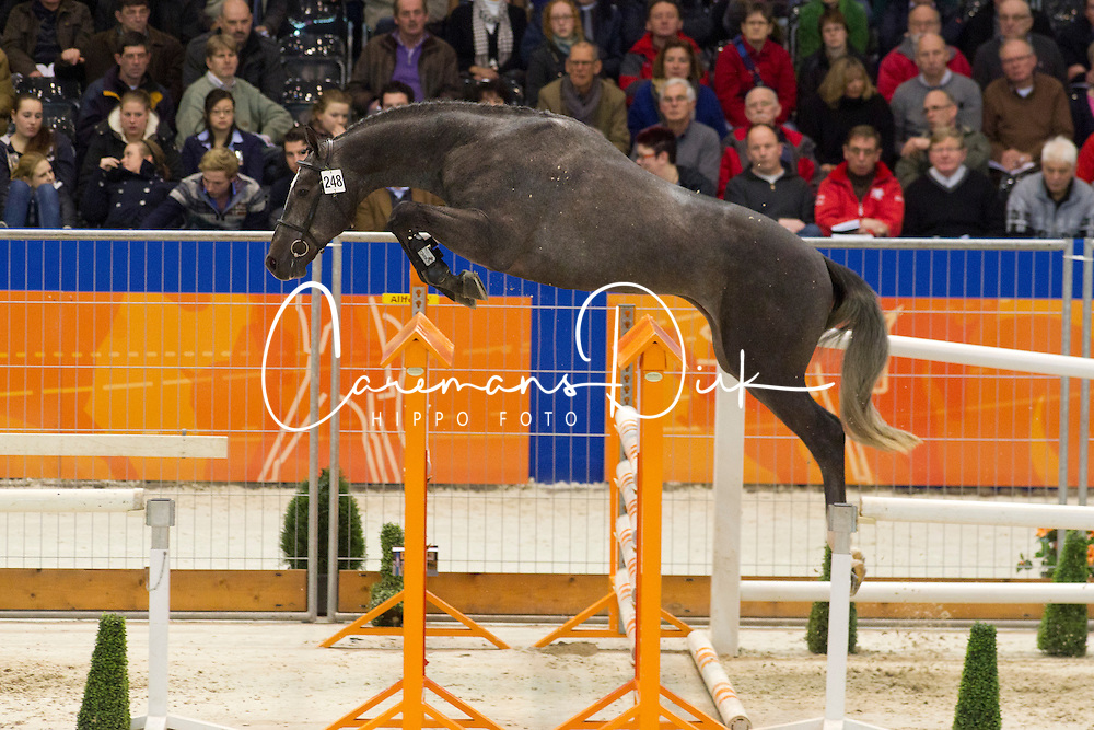 248 - Edward<br /> KWPN Hengstenkeuring - 's Hertogenbosch 2012<br /> © Dirk Caremans