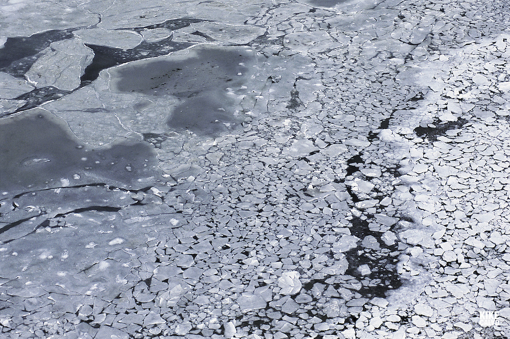 The sea ice in Hudson Bay, Canada, now breaks up 2 1/2 weeks earlier than it did 30 years ago. WWF says polar bears (Ursus maritimus) are set to become one of the most notable casualties of global warming unless drastic action is taken. The impact of climate change is increasingly felt in polar regions, where summer sea ice is expected to decrease by 50?00 per cent over the next 50?00 years. Polar bears are predicted to suffer more than a 30 per cent population decline in the next 45 years.