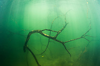"""Typical underwater setting while looking for green anacondas (Eunectes murinus) in a river system in Bonito, Mato Grosso Sul, Brazil. Photographed while filming Tales by Light, Season 2, Episode 3, """"Misunderstood Predators"""", for Netflix and National Geographic Australia. August, 2016."""
