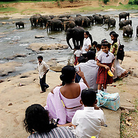 PINNAWELA, OCTOBER-3 : a family watches the elephants bathing in the Ma Oya river in Pinnawala, October 3, 2005, Sri Lanka.  PINNAWELA, OCTOBER-3 : an elephant greets a visitor   in Pinnawela, October 3, 2005, Sri Lanka.   .The Pinnawela orphanage was started in 1975 and initially designed to afford care and protection to the many baby elephants found in the jungle without their mothers. In most cases the mother either had died or been killed. .Animals are allowed to roam freely duringthe day and a herd structure allows to form. there are only a few elephant orphanges worldwide. At Pinnawela an attempt was made to simulate, in a limited way, the conditions in the wild. Currently the herd consists of 75 elephants under the surveillance of legendary  Mahout chief Sumanabanda.