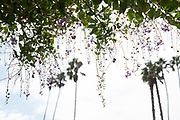 Venice landscape photo print of the Venice sky, palm trees and tree branches with purple flowers. California wall art for your home. Los Angeles, Westside, Southern California landscape photography. Matted print, limited edition. Fine art photography print.