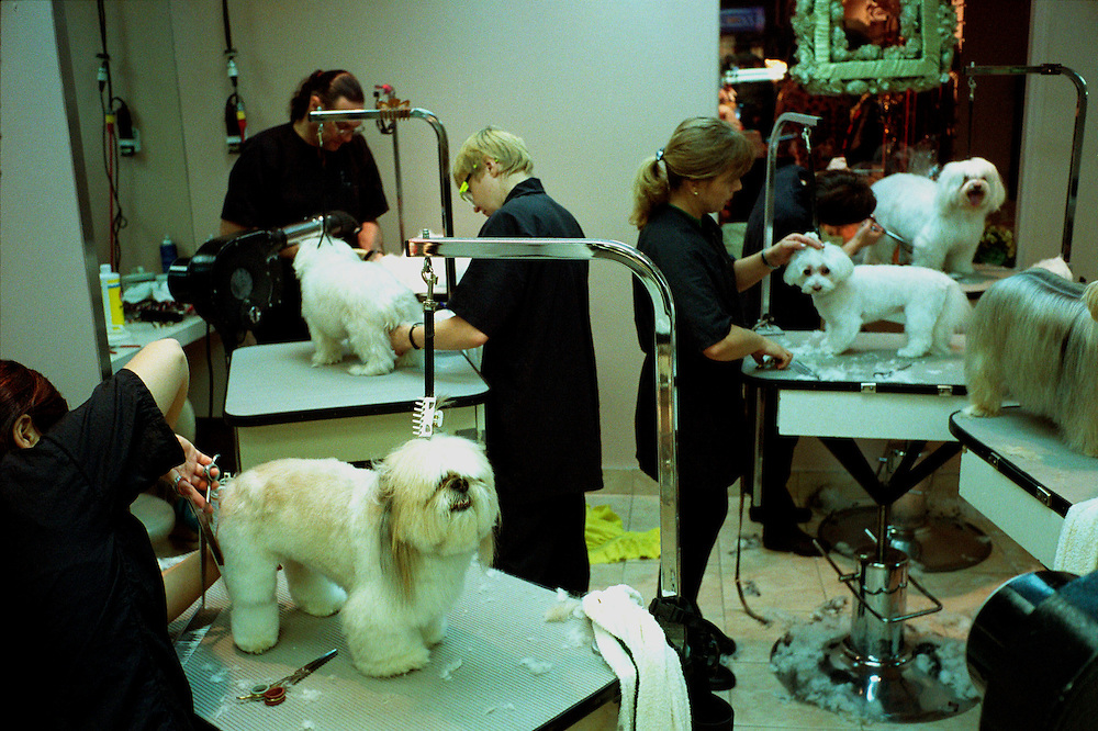 Karen's pets store : the grooming room at the pet store, Upper East Side, New York City, Dec 14 2002.