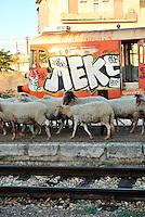 Le Ferrovie del Sud Est nascono in Puglia, nell'ottobre del 1931. A questà nuova società veniva dato in concessione l'insieme delle reti ferroviarie precedentemente gestite da diversi organismi (Società per le Ferrovie Salentine, Società per le Ferrovie Sussidiate, Ferrovie dello Stato)..Le aree pugliesi attraversate dalla società ferroviaria sono l'area barese, la fascia Taranto-Brindisi e l'area leccese-salentina, collegando fra loro i capoluoghi di Bari, Taranto e Lecce, nonché oltre 130 comuni delle province meridionali..Il reportage fotografico sulle Ferrovie Sud Est intende testimoniare l'evoluzione tecnologica che, durante gli anni, ha modificato e migliorato il servizio ferroviario e la convivenza del progresso con tracce del passato, attraverso un viaggio tra le stazioni e i depositi..Pecore che attraversano la stazione di Mungivacca.