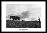 Bilde viser en mann som pløyer jorden i County Kilkenny, 1953. Gårdsarbeid på 1950 tallet med.hest.